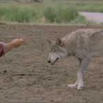 1990 - Dances With Wolves - 03